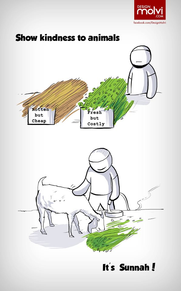 Short essay on kindness to animals