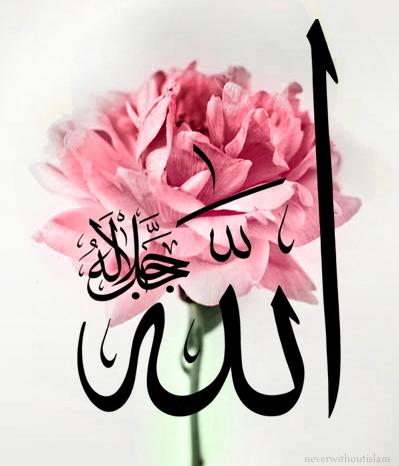 Allah Rose Driverlayer Search Engine