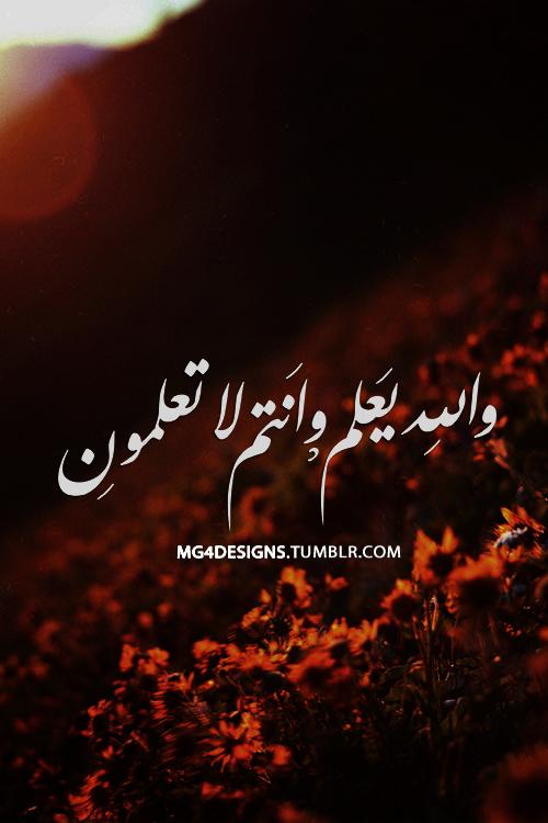 الله نورْ السمآوآتْ والأرضْ صورْ arabic-calligraphy-9